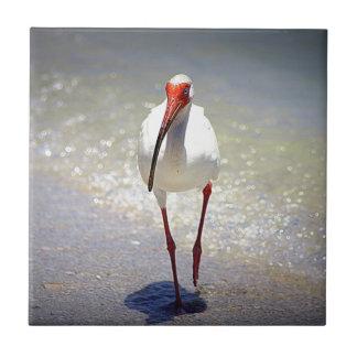 Puntal blanco de Ibis Azulejo Cuadrado Pequeño