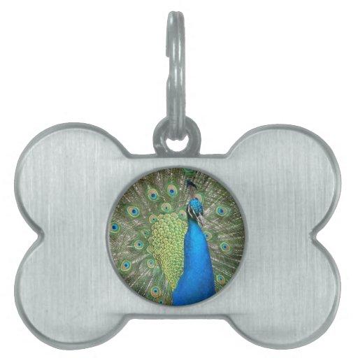 Puntal del pavo real placa de nombre de mascota
