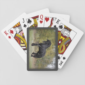 Puntal del semental baraja de póquer