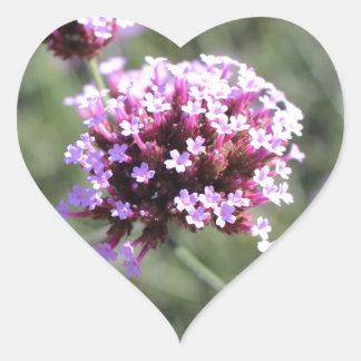 Puntilla de la flor de la verbena de la lila pegatina en forma de corazón