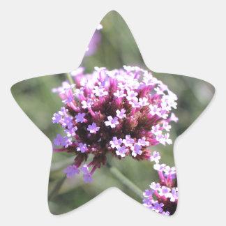 Puntilla de la flor de la verbena de la lila pegatina en forma de estrella