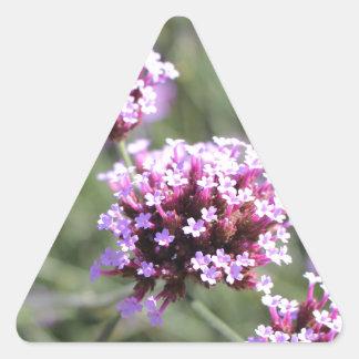 Puntilla de la flor de la verbena de la lila pegatina triangular