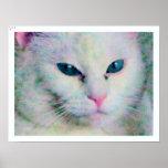 Punto de ojos azules el gato poster