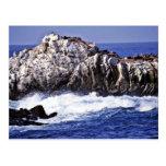 Punto del león marino - pinta. Reserva del estado  Tarjeta Postal