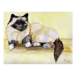 Punto del sello del gato birmano tarjetas postales