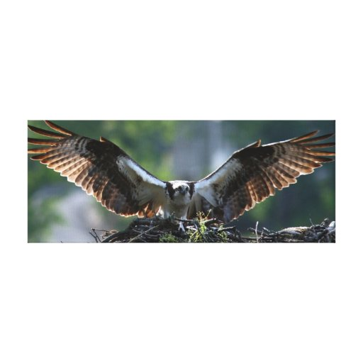 Punto final del ~ de Osprey Impresion En Lona