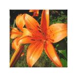 Puntos anaranjados Sunlit de los lirios Lona Envuelta Para Galerías