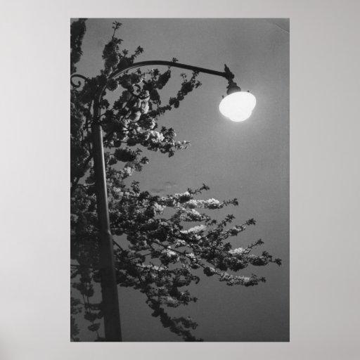 puntos culminantes de la Noche-luz Impresiones