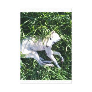Pup Canvas Print