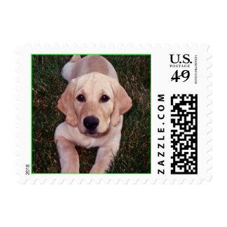pup pup 1_edited, luey - Customized Postage