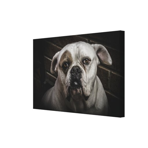 PUP STRETCHED CANVAS PRINT