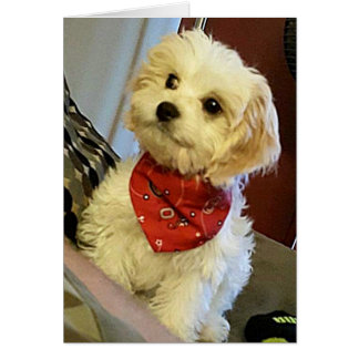 """PUP WISHES """"YOUR TWIN""""/""""BEST FRIEND"""" BIRTHDAY WISH CARD"""