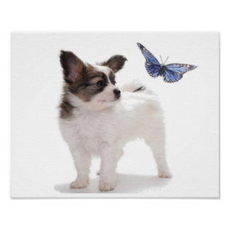PUP WITH BUTTERFLY POSTER