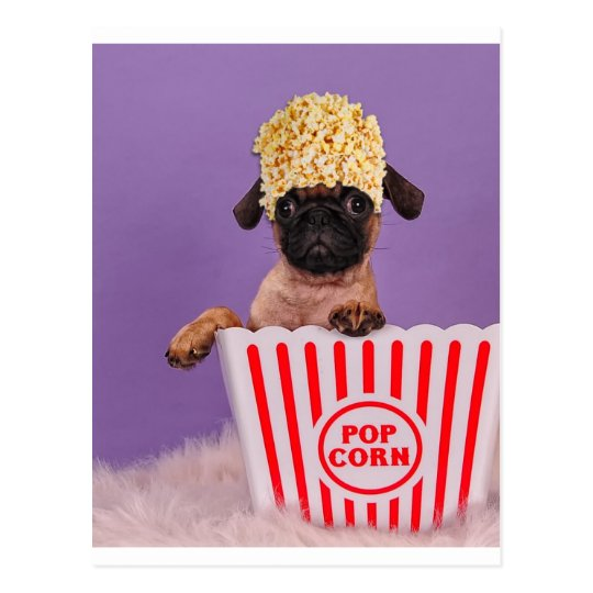 Pupcorn anyone? postcard