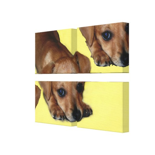 Pupnosis Wrapped Canvas Quad  Panels Gallery Wrap Canvas