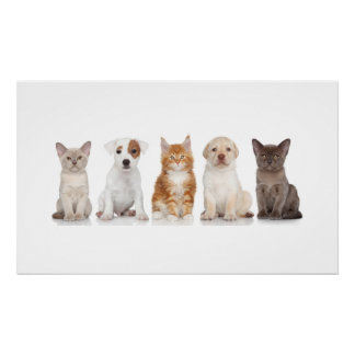 Puppies and Kittens - Poster - srf