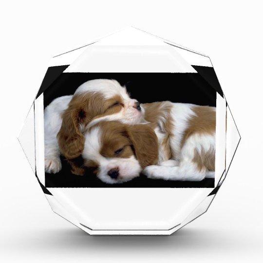 Puppies Award