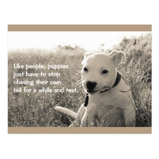 Puppies Chase Their Own Tail Dog Postcard