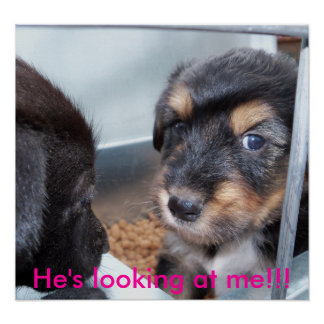 puppies He s looking at me Print