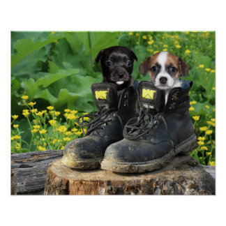 Puppies in work boots poster