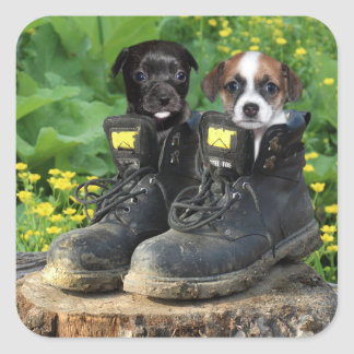 Puppies in work boots square sticker