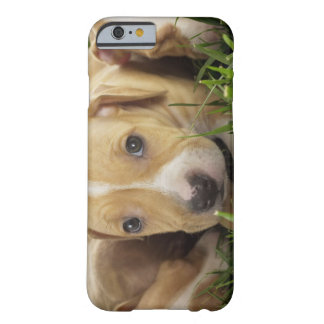 Puppies laying in grass barely there iPhone 6 case