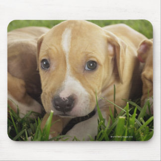 Puppies laying in grass mouse pad