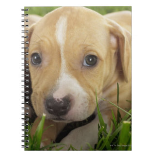 Puppies laying in grass notebook