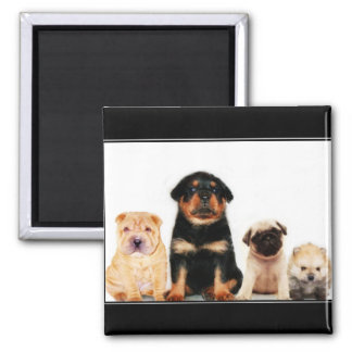 Puppies magnet