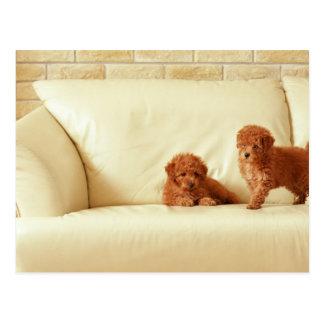 Puppies On The Sofa Postcard