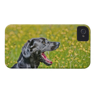 Puppy 16 Months iPhone 4 Cover