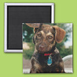 Puppy 2 Inch Square Magnet