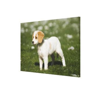 Puppy 3 canvas print