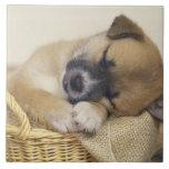 Puppy 3 ceramic tile
