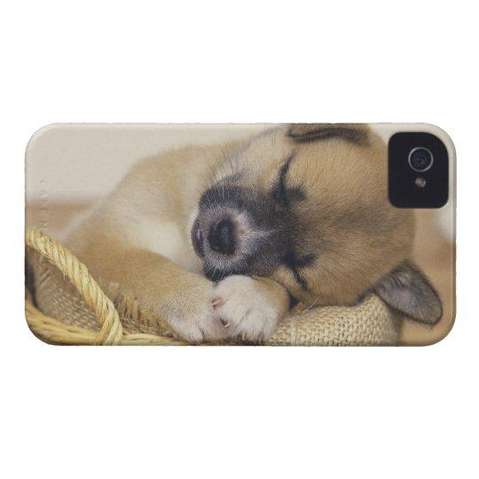 Puppy 3 iPhone 4 case