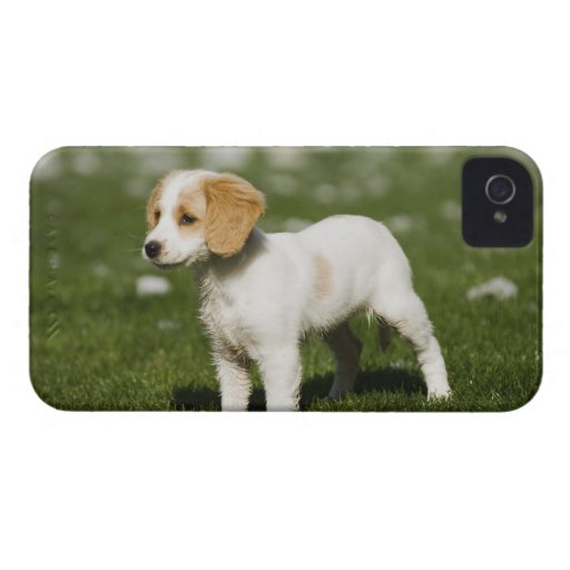 Puppy 3 iPhone 4 cover