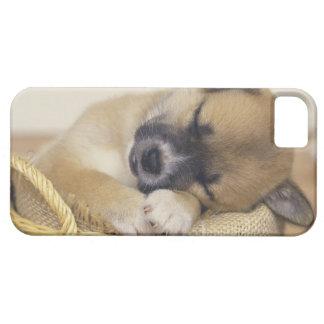 Puppy 3 iPhone SE/5/5s case