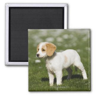 Puppy 3 magnet