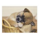 Puppy 3 postcard