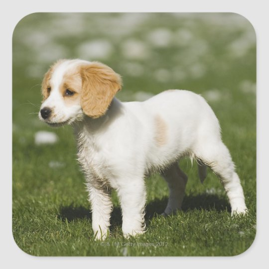 Puppy 3 square sticker