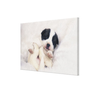Puppy 4 canvas print