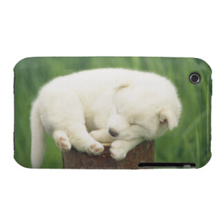 Puppy 4 iPhone 3 covers