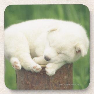 Puppy 4 coasters