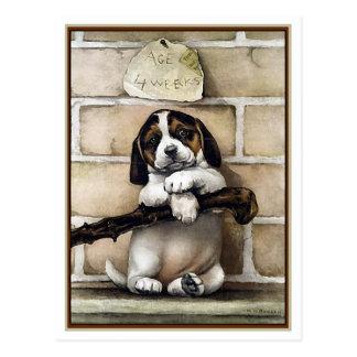 Puppy, 4 Weeks Old Postcard