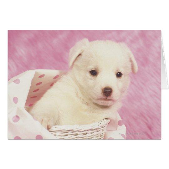 Puppy 5 card