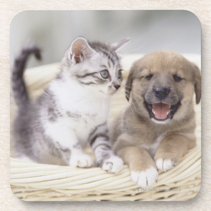 Puppy and Baby Cat Drink Coaster