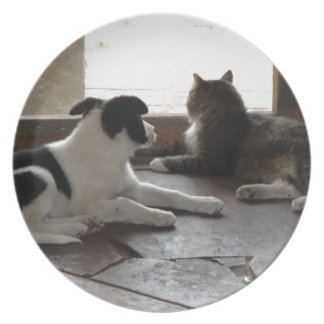 Puppy and Cat Buddies Relaxing by the Screen Door Dinner Plate