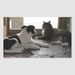 Captivating Puppy And Cat Buddies Relaxing By The Screen Door Rectangular Sticker