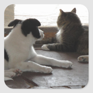 Puppy and Cat Buddies Relaxing by the Screen Door Square Sticker