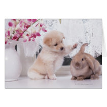 Puppy and Lop Ear Rabbit
